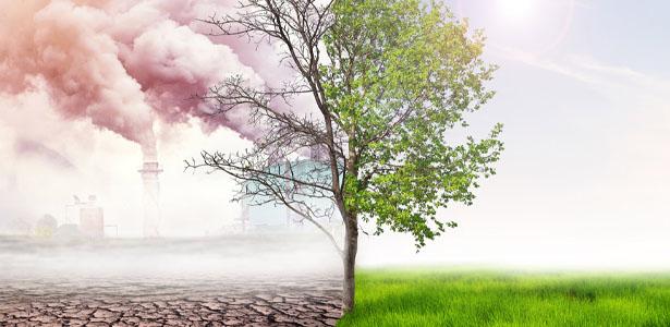 CDP Katılımcılarının Karbon Ayak İzleri Dengelendi!